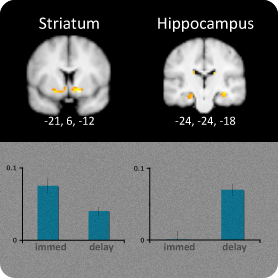 mri image of activation in striatum and hippocampus, bar graph under showing immediate and delayed learning